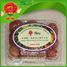 Tomate orgánico chino de primera calidad