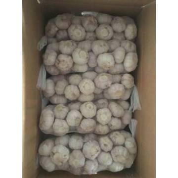 Vente chaude 1 * 10kg ail blanc normal dans le carton