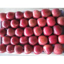 Fresh Huniu apple fruit à venda