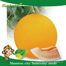Suntoday желтой корочкой хозяйства оранжево-красной мякотью овощной УГ со хами известно-овощ гибрид дыни японские семена Ф1(11019)