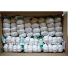 Chinese garlic 4p,10kg carton
