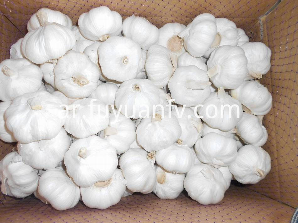 Pure White Garlic 30