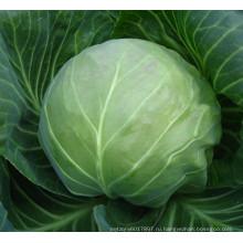 HC54 Kexue круглый темно-зеленый гибрид F1 семена капусты