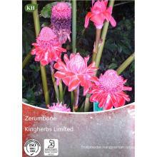 Zingiber Zerumbet Extract