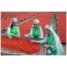 Organtic Нинся ягоды Годжи (Лайчи Нинся) (350grains/50г)