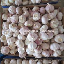 Frischer Knoblauch / frischer chinesischer Knoblauch / frischer China-Knoblauch