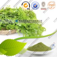 Vente en gros Moringa Powder Moringa en poudre Leaf Bulk Price