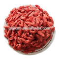 Super-Goji-Beere / Goji-Beerenextrakt für Gesundheitsprodukte