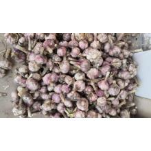 Alho Fresh Garlic Fresh Price From Fresh Jining Garlic / ajo Chino Jinxiang Garlic