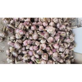 Garlic Fresh Garlic Fresh Price From Fresh Jining Garlic / ajo Chino Jinxiang Garlic