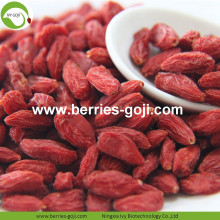 Venta al por mayor de Sweet Dry Low Pesticide Goji Berry