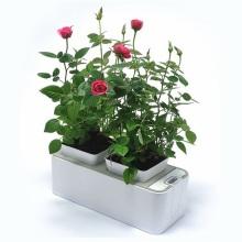Indoor Planter Growing Rubber Flower Pot