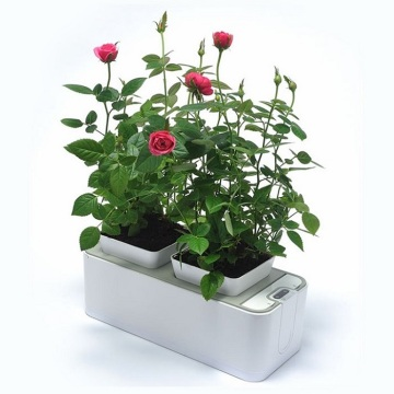 Indoor+Planter+Growing+Rubber+Flower+Pot