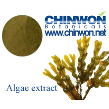 Emollient and Skin Conditioning Brown Algae Fucus Extract