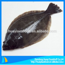 good quality fresh frozen flounder for sale