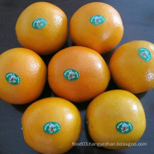 Good Quality Chinese Fresh Nave Orange