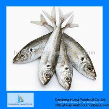 Poisson de sardine de fruits de mer frais congelé