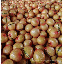 China Fresh Honey Pomelo with Cheapest Price Europe High Quality