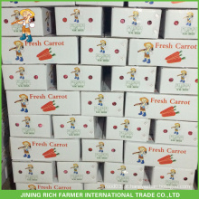 Nova Cereja Cenoura Fresca 8Kg Para Mercado De Kuwait