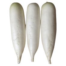 2014 Neuer Ernte zum Verkauf Frischer weißer Rettich