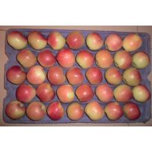 2015 Frische Gala-Apfel von Shandong Boren