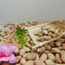 Heißer Verkauf Neue Ernten von Saubohnen