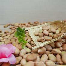 Venda quente Novas culturas de favas