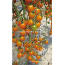 TY02 Huangjiaren овальной формы гибрид F1 желтый помидоры Черри семена
