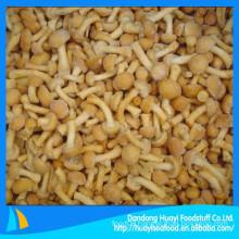 Good for health fresh frozen mushroom nameko