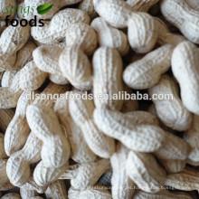 Cacahuetes confitados en alibaba