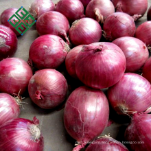 small fresh onion from china