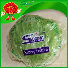 NUEVO 2015 lechuga de iceberg orgánica de Yunnan