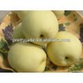 fresh Ya pear supplier