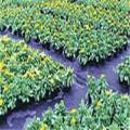Xinhao Factory Supply PE / PP avec couvre-sol agricole en plastique UV