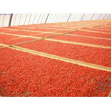 Bulk Goji Berries Originated From Ningxia