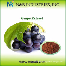 grapes seeds extract 95%OPC UV