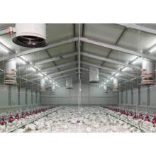Casa de aves de corral, granja de pollos (PCH-11)