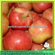 China maçã vermelha gala fornecedor