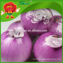 Nueva cosecha de cebolla roja fresca con el mejor precio