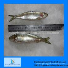 Congelado perfeito melhor exportador de sardinha para melhor qualidade