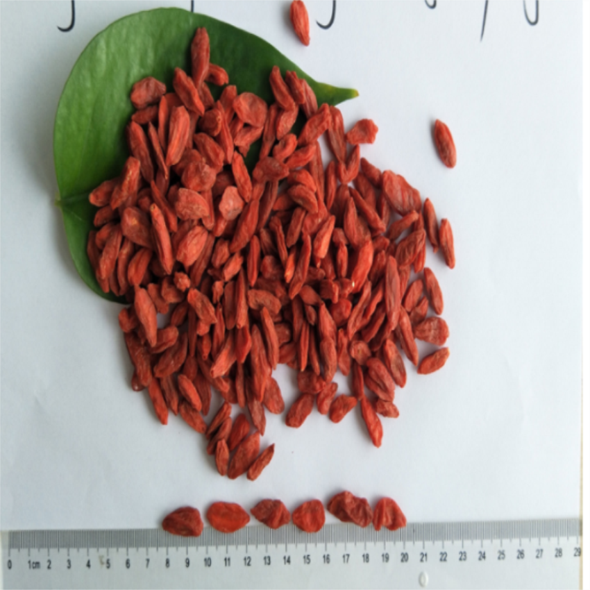 Food Grade New Harvest goji berry / wolfberry