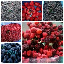 Nouvelle récolte de petits fruits surgelés surgelés IQF en haute qualité