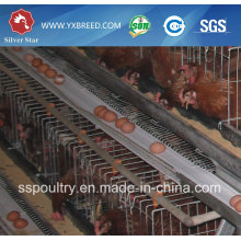 Commercial Chicken House for Sale / Layer Cage / Design Layer Chicken Cages