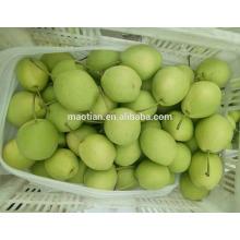 Año 2017 Shandong Pears