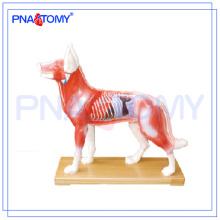 PNT-AM44 Dog Acupuncture Model animal anatomy model