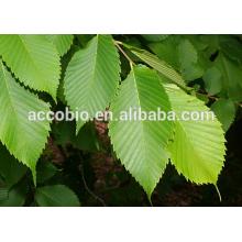 Wholesale 4:1 organic slippery elm bark extract