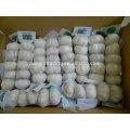 Export hohe Qualität kleine Verpackung 5 P Chinese Fresh Knoblauch Produkt normal weiß