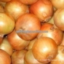Cebola amarela / 5-7cm cebola fresca chinesa / cebola vermelha pequena
