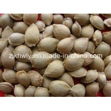 Sweet Almond in Shell (youyi 15-17mm)