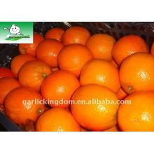 Big Navel Orange